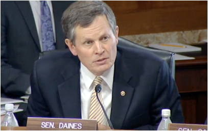 Daines Forest hearing